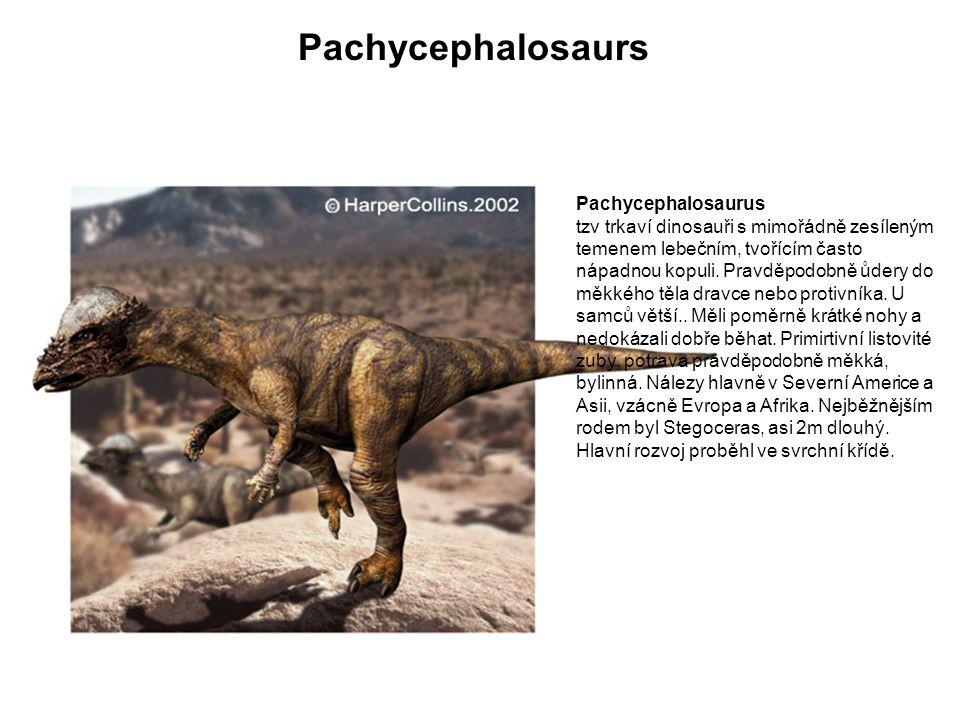 Pachycephalosaurs Pachycephalosaurus