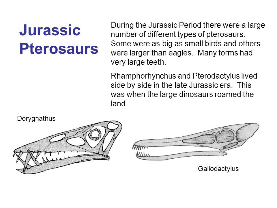 Jurassic Pterosaurs
