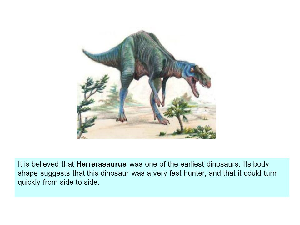 It is believed that Herrerasaurus was one of the earliest dinosaurs