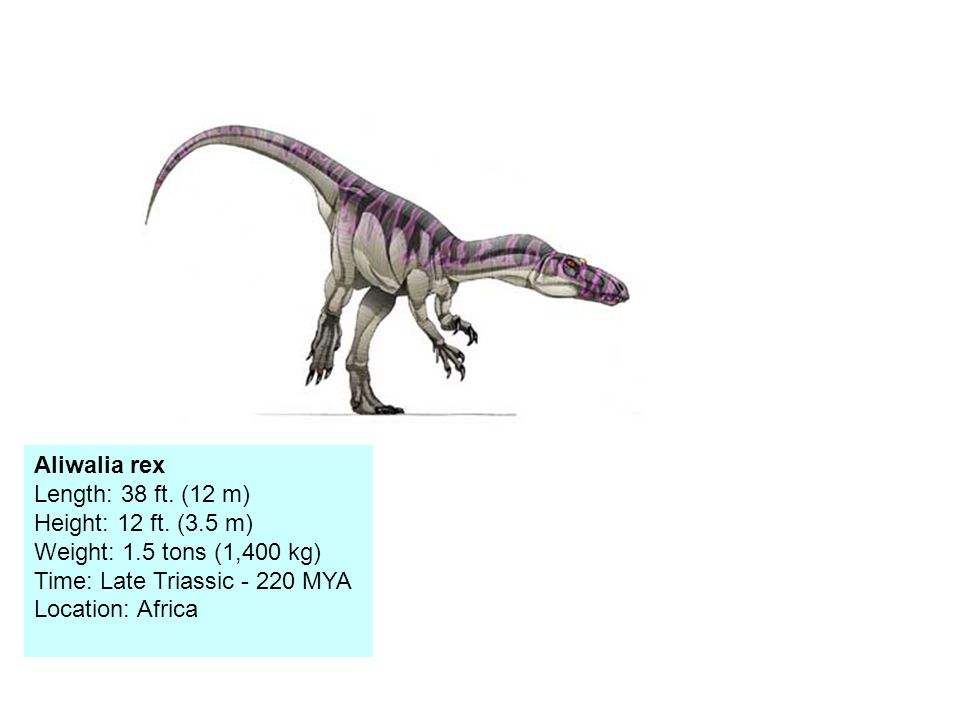 Aliwalia rex Length: 38 ft. (12 m) Height: 12 ft.
