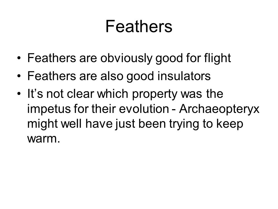 Feathers Feathers are obviously good for flight