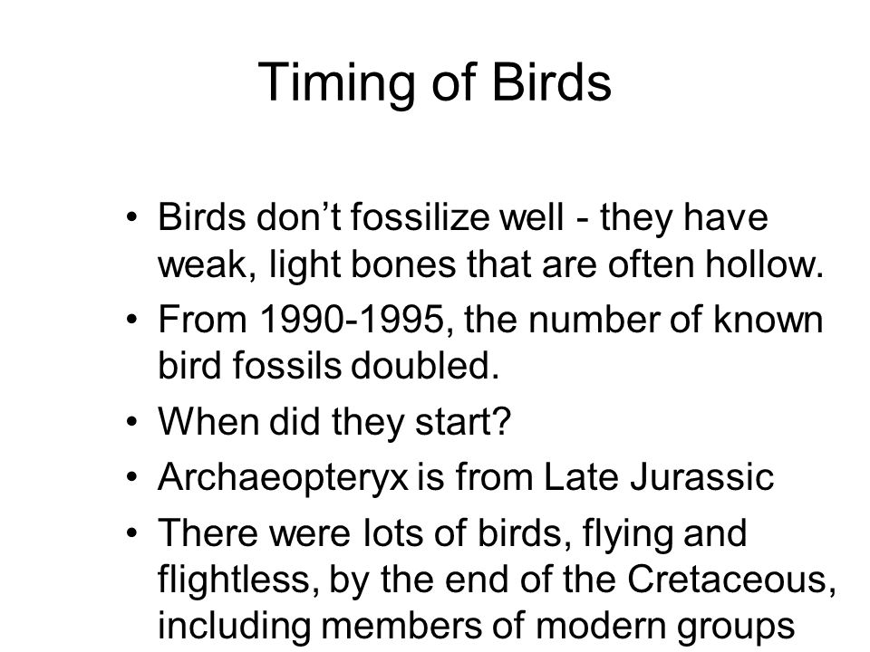 Timing of Birds Birds don't fossilize well - they have weak, light bones that are often hollow.
