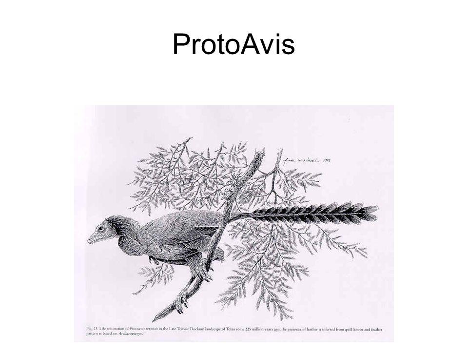ProtoAvis