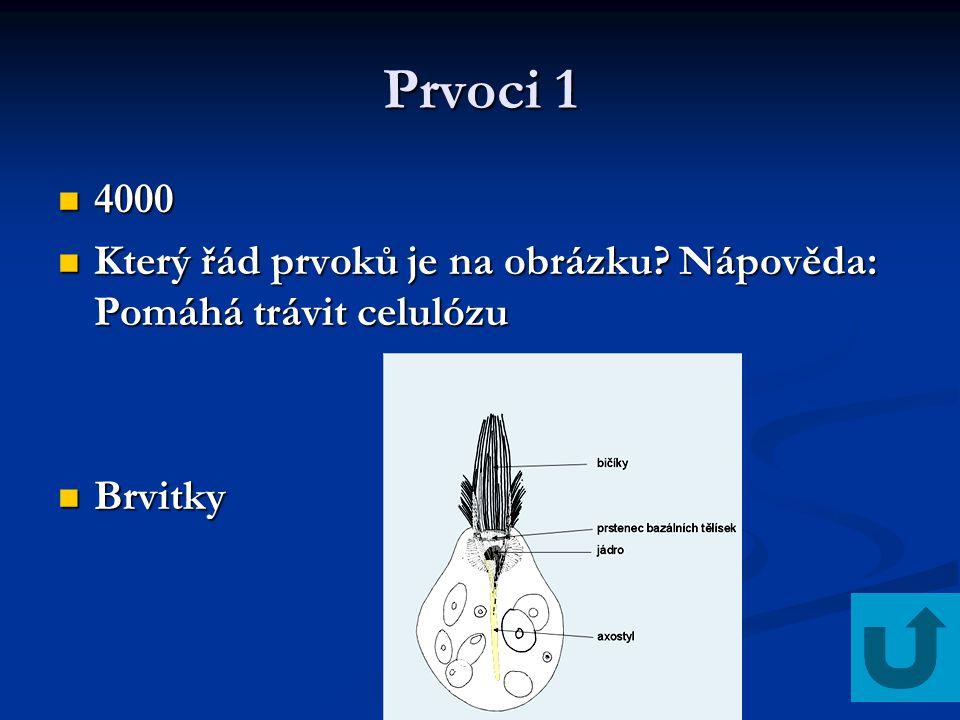 Prvoci 1 4000 Který řád prvoků je na obrázku Nápověda: Pomáhá trávit celulózu Brvitky