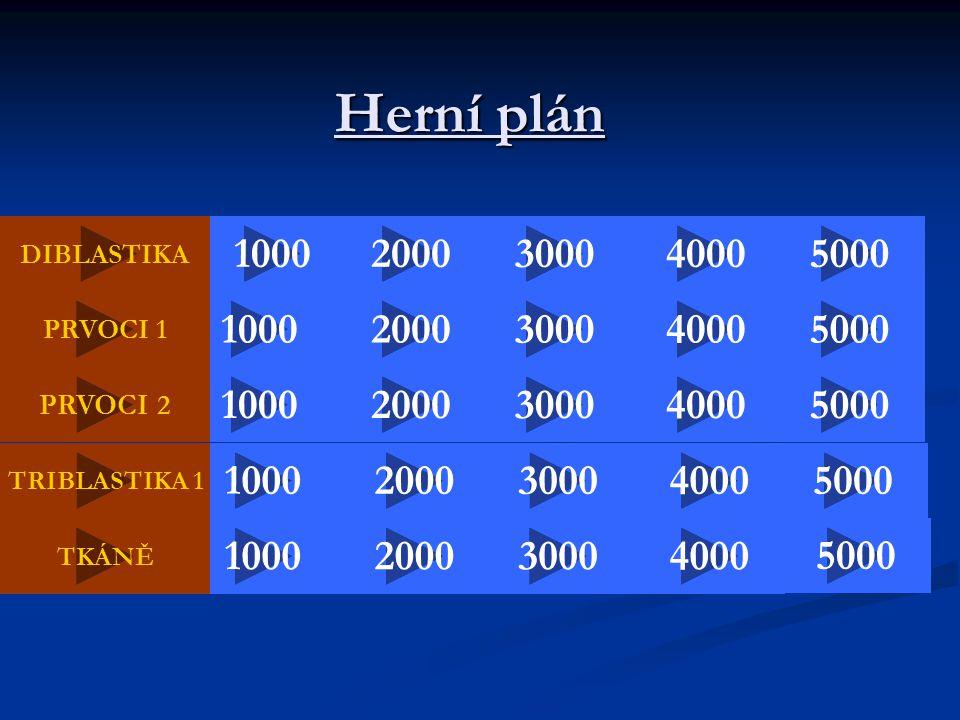 Herní plán DIBLASTIKA. 1000. 2000. 3000. 4000. 5000. PRVOCI 1. 1000. 2000. 3000. 4000. 5000.
