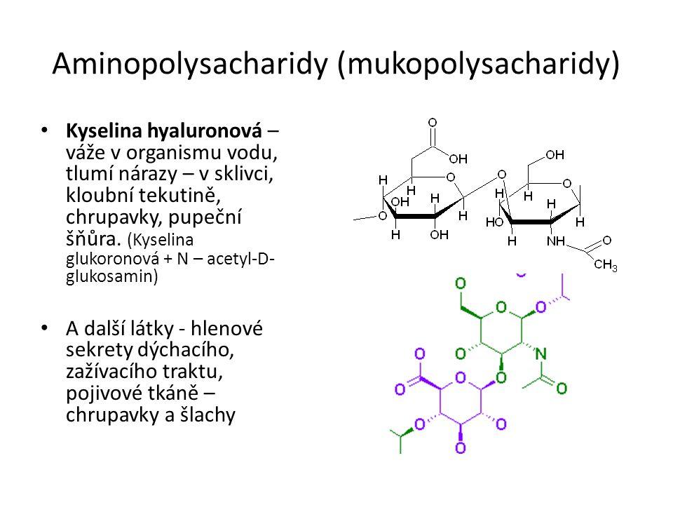 Aminopolysacharidy (mukopolysacharidy)