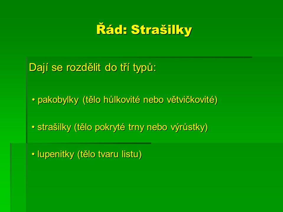 Řád: Strašilky Dají se rozdělit do tří typů: