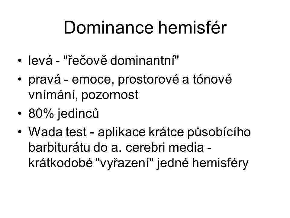 Dominance hemisfér levá - řečově dominantní