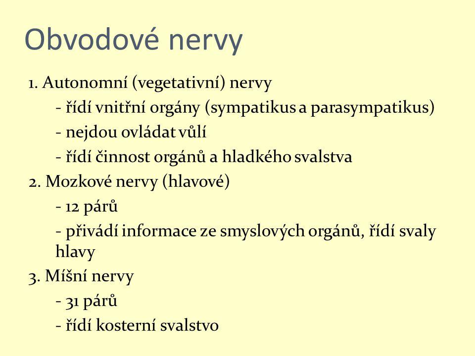 Obvodové nervy 1. Autonomní (vegetativní) nervy