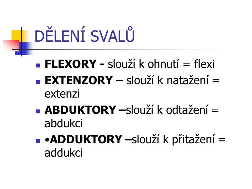 DĚLENÍ SVALŮ FLEXORY - slouží k ohnutí = flexi