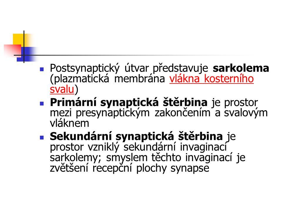 Postsynaptický útvar představuje sarkolema (plazmatická membrána vlákna kosterního svalu)