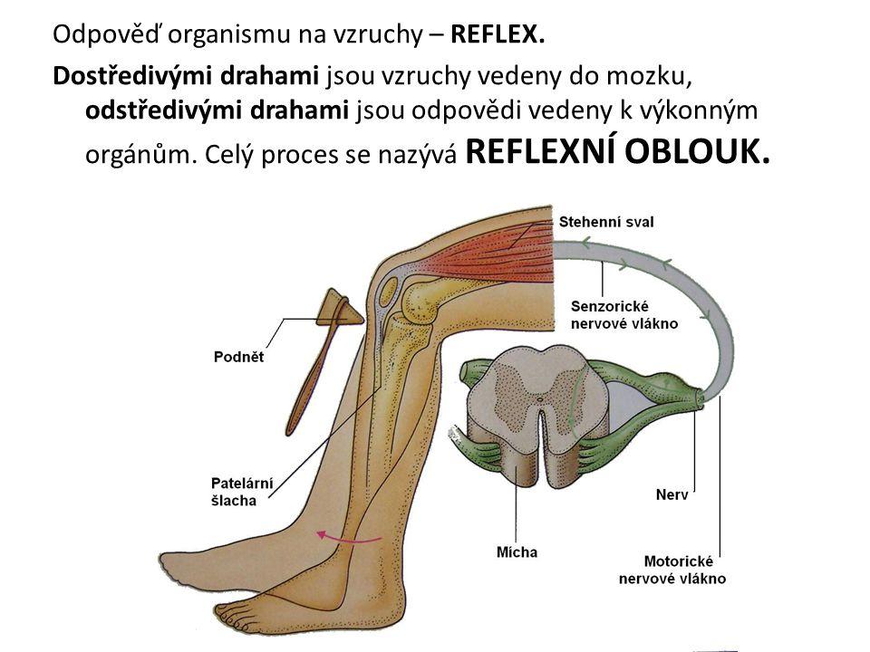 Odpověď organismu na vzruchy – REFLEX