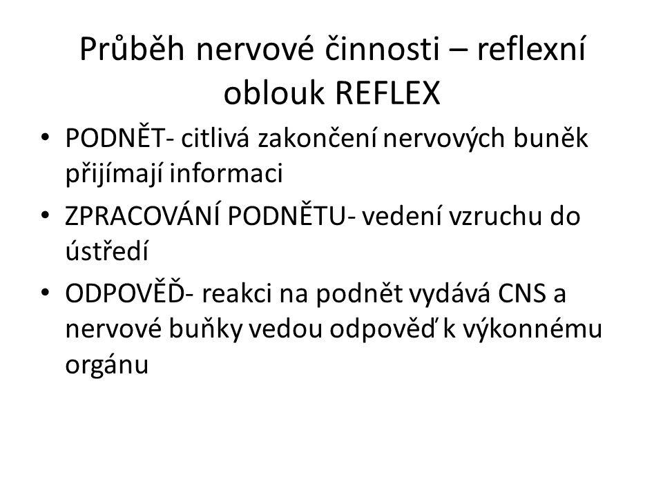 Průběh nervové činnosti – reflexní oblouk REFLEX