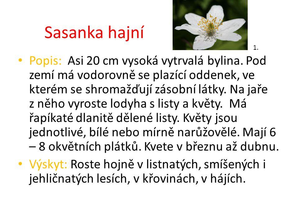 Sasanka hajní 1.