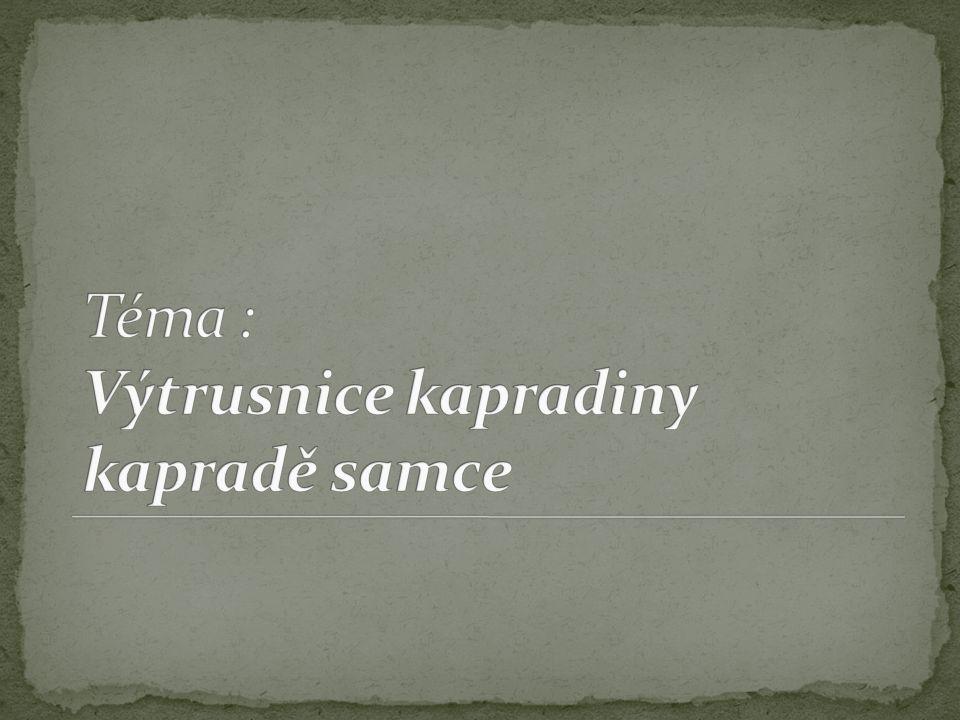 Téma : Výtrusnice kapradiny kapradě samce