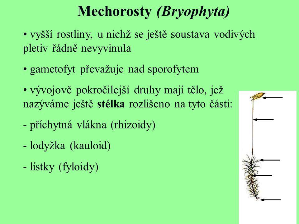 Mechorosty (Bryophyta)