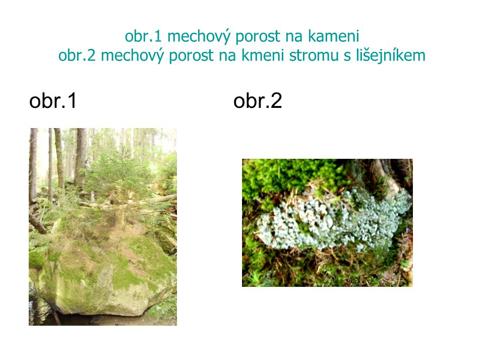obr. 1 mechový porost na kameni obr