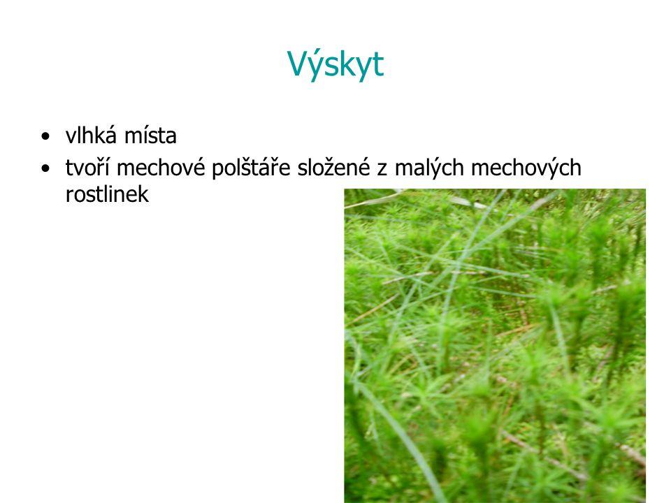 Výskyt vlhká místa tvoří mechové polštáře složené z malých mechových rostlinek