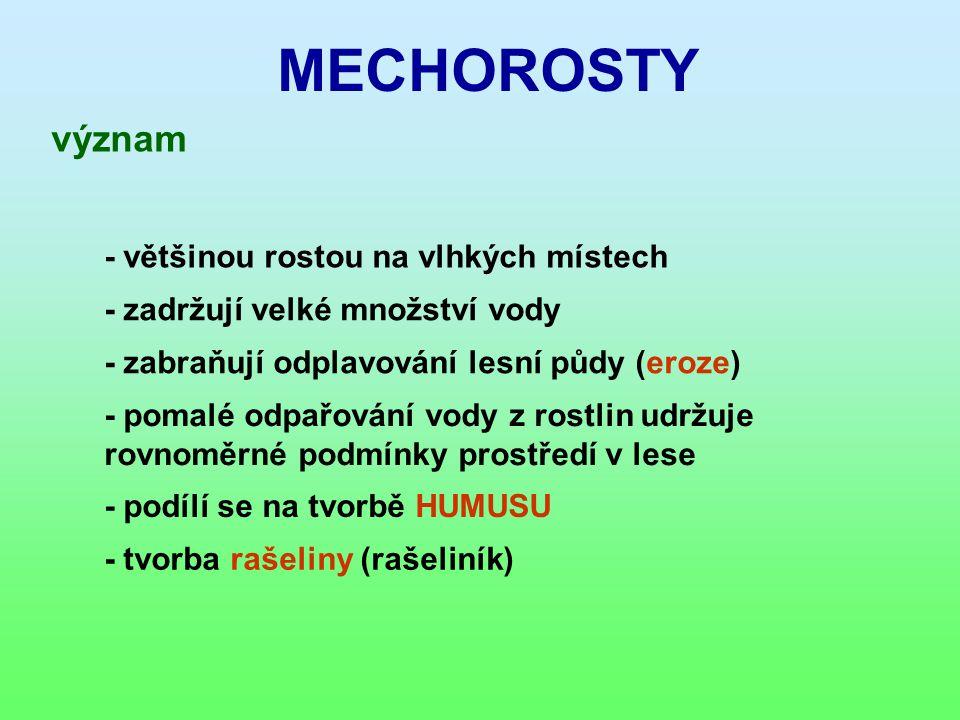 MECHOROSTY význam - většinou rostou na vlhkých místech