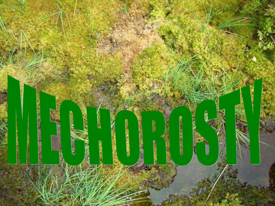 MECHOROSTY