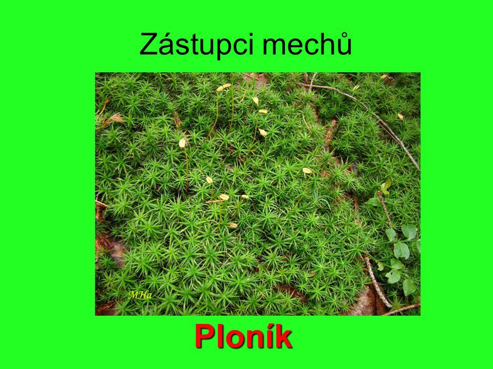 Zástupci mechů Ploník