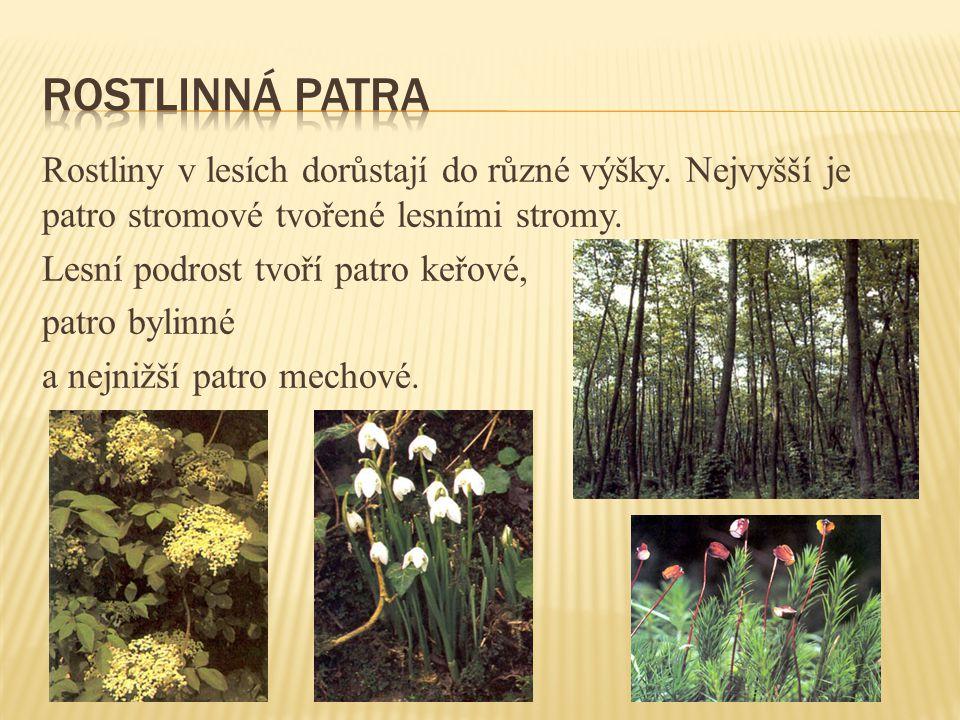Rostlinná patra