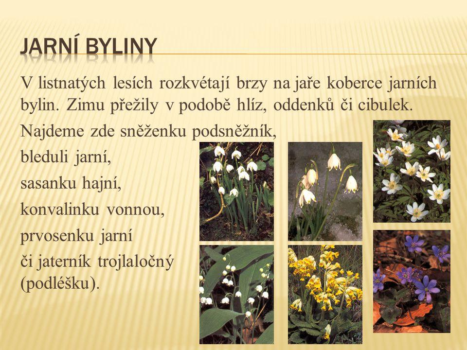Jarní byliny