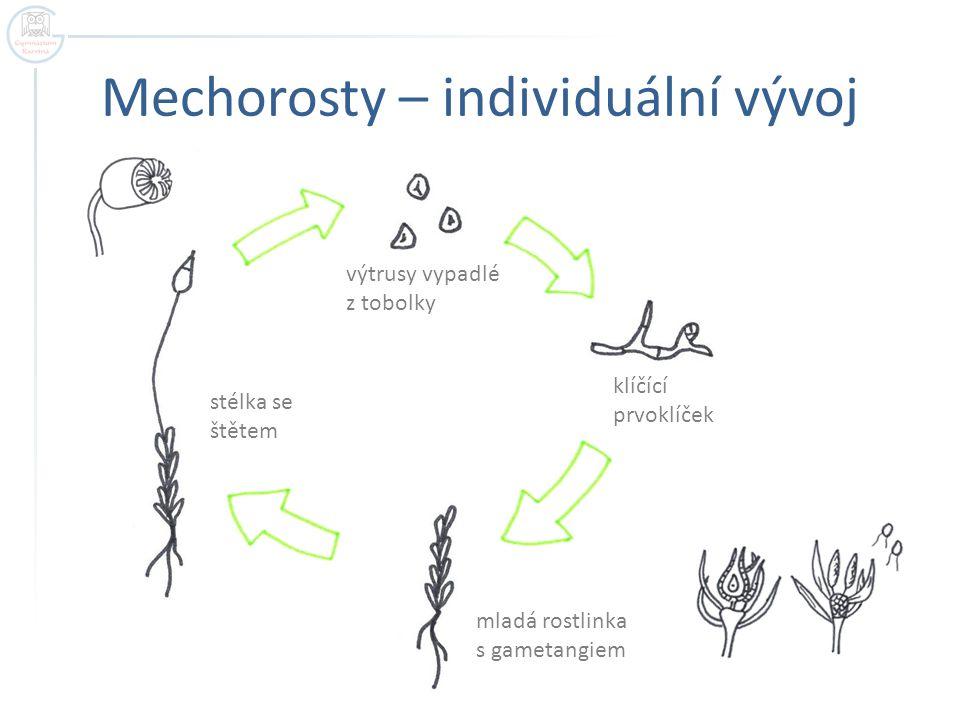 Mechorosty – individuální vývoj