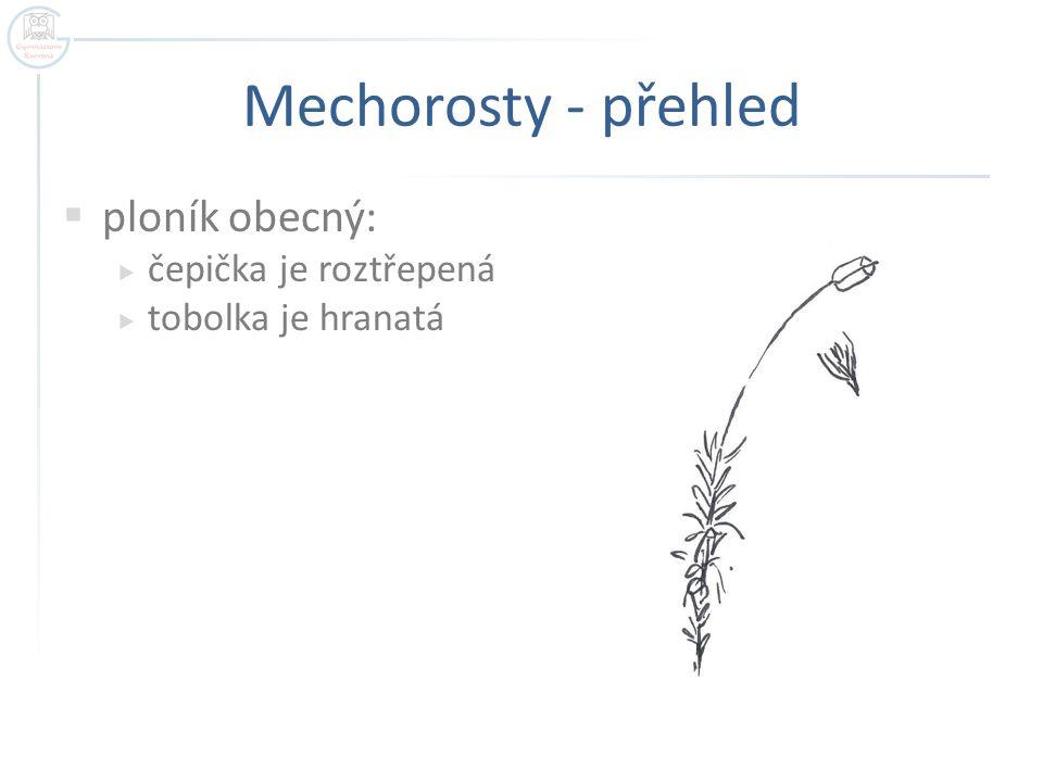Mechorosty - přehled ploník obecný: čepička je roztřepená