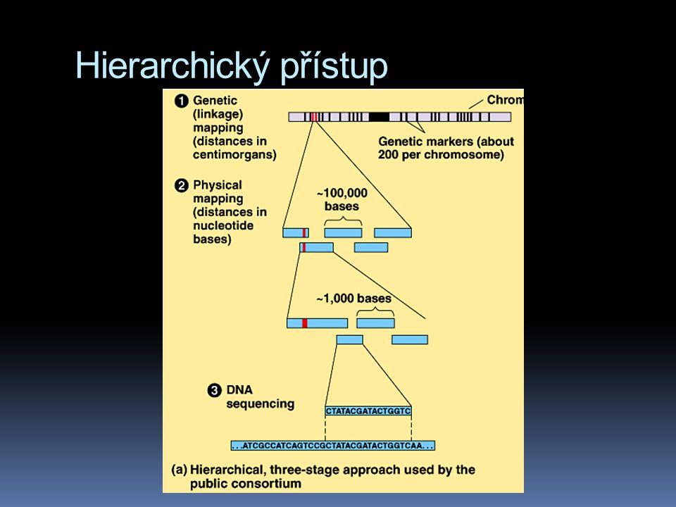 Hierarchický přístup
