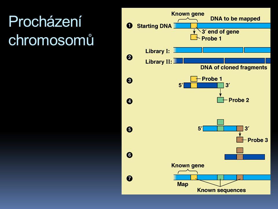 Procházení chromosomů