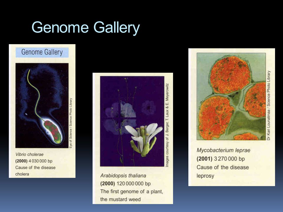 Genome Gallery