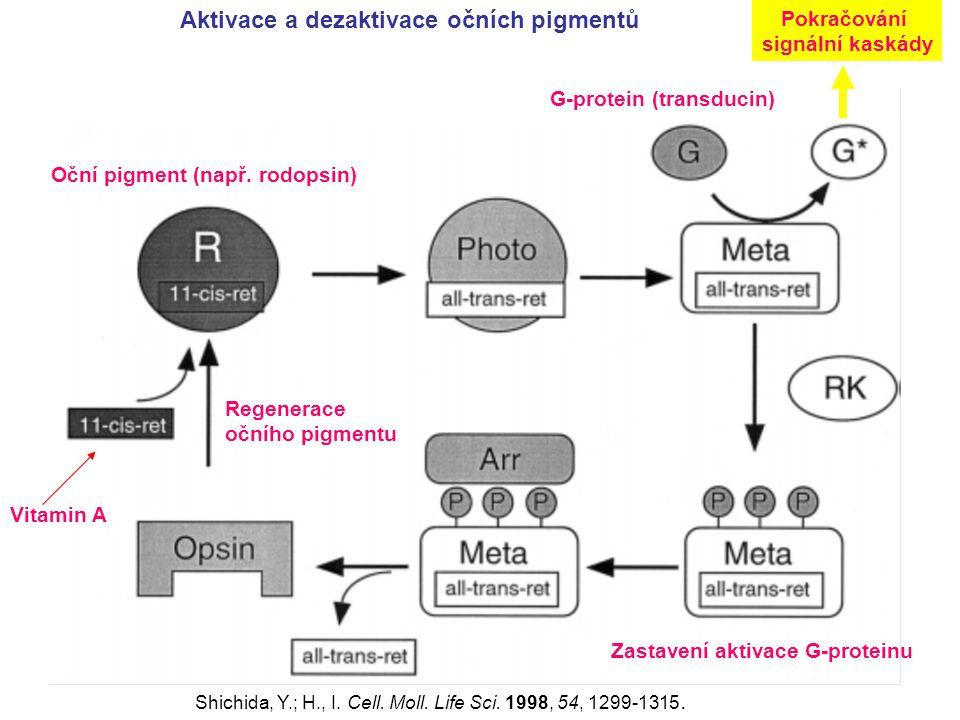 Aktivace a dezaktivace očních pigmentů