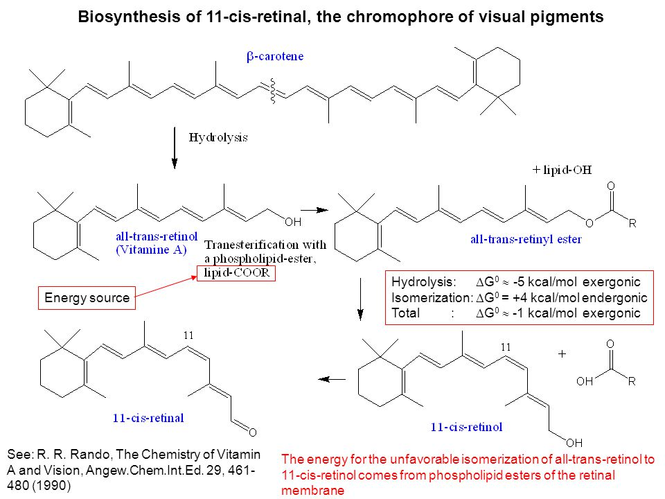 Biosynthesis of 11-cis-retinal, the chromophore of visual pigments