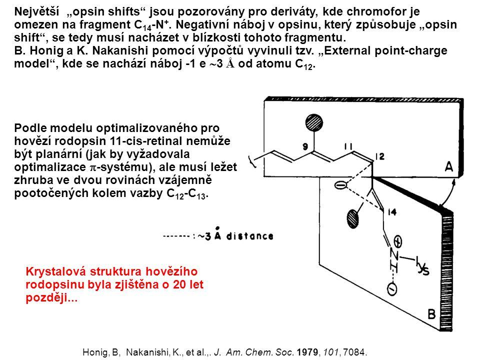 """Největší """"opsin shifts jsou pozorovány pro deriváty, kde chromofor je omezen na fragment C14-N+. Negativní náboj v opsinu, který způsobuje """"opsin shift , se tedy musí nacházet v blízkosti tohoto fragmentu."""