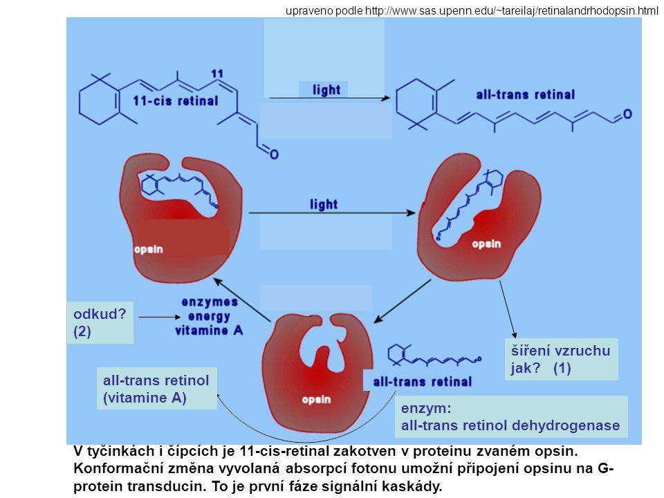 all-trans retinol dehydrogenase
