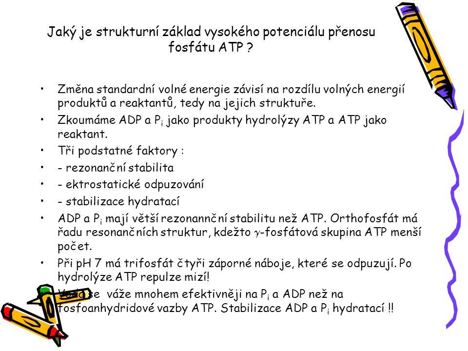 Jaký je strukturní základ vysokého potenciálu přenosu fosfátu ATP