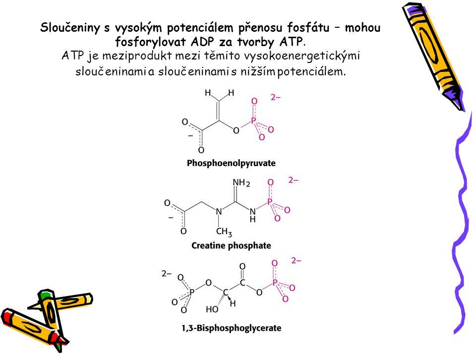 Sloučeniny s vysokým potenciálem přenosu fosfátu – mohou fosforylovat ADP za tvorby ATP.