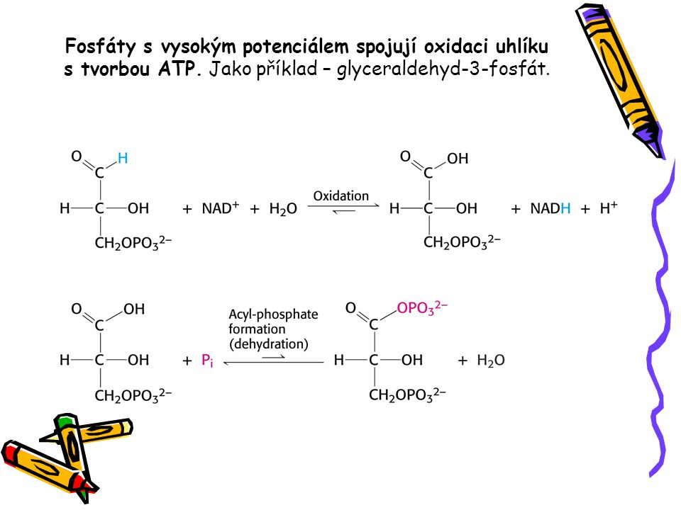 Fosfáty s vysokým potenciálem spojují oxidaci uhlíku s tvorbou ATP