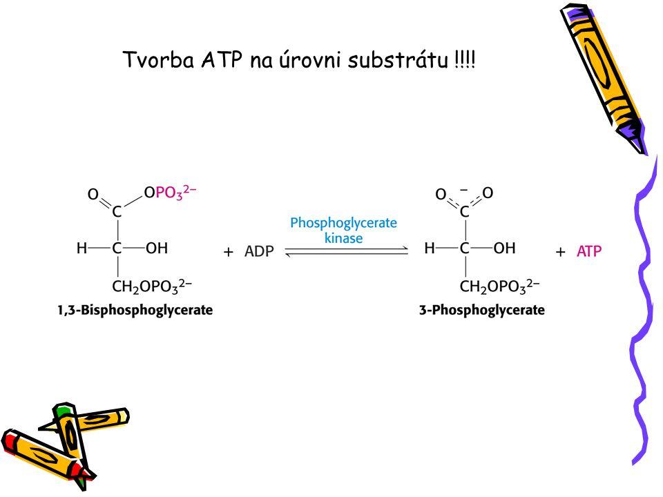 Tvorba ATP na úrovni substrátu !!!!