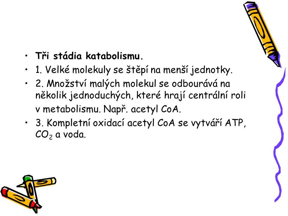 Tři stádia katabolismu.