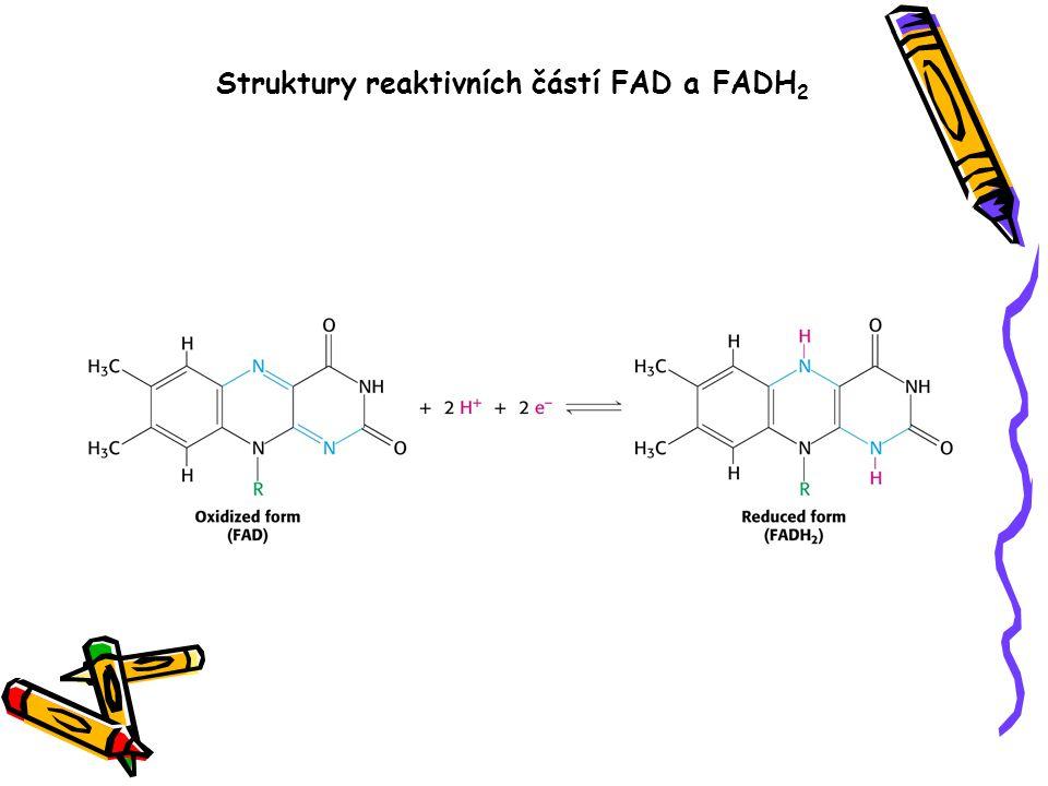 Struktury reaktivních částí FAD a FADH2