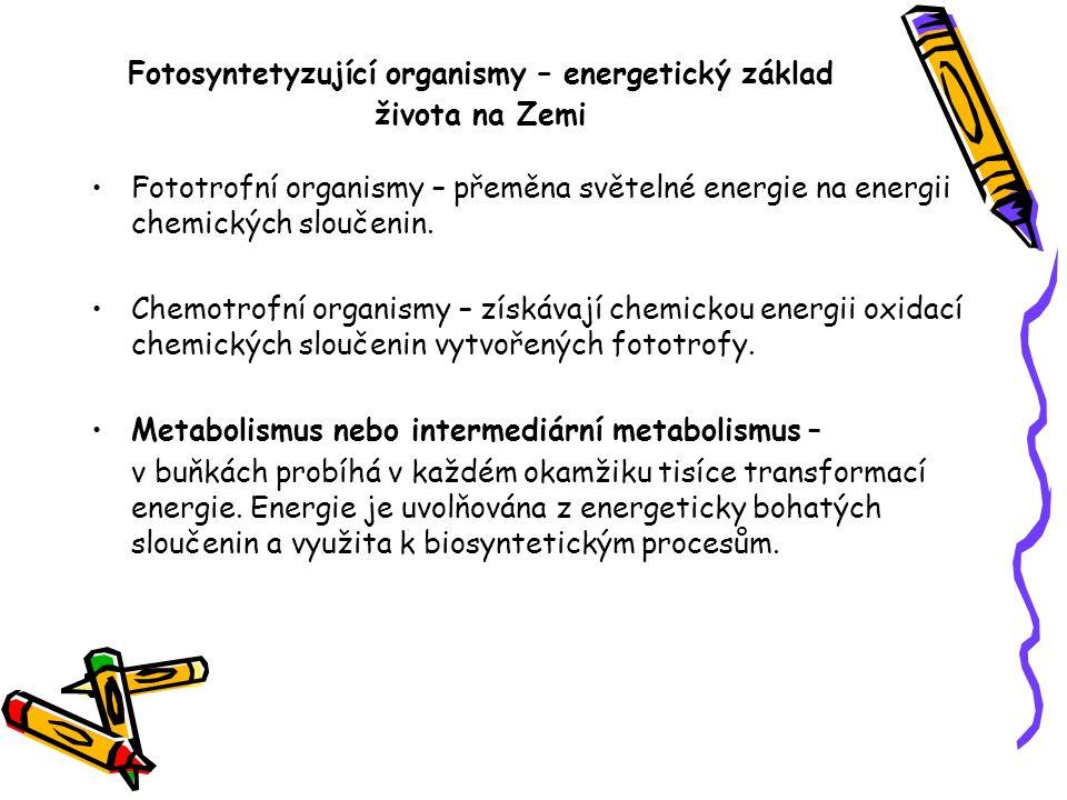 Fotosyntetyzující organismy – energetický základ života na Zemi