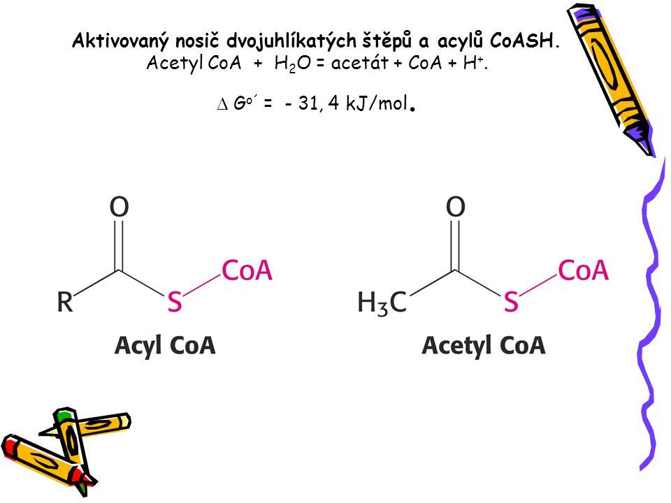 Aktivovaný nosič dvojuhlíkatých štěpů a acylů CoASH