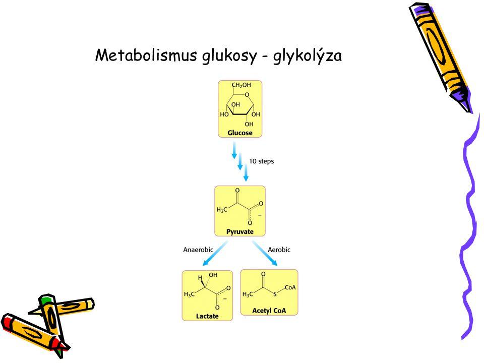 Metabolismus glukosy - glykolýza