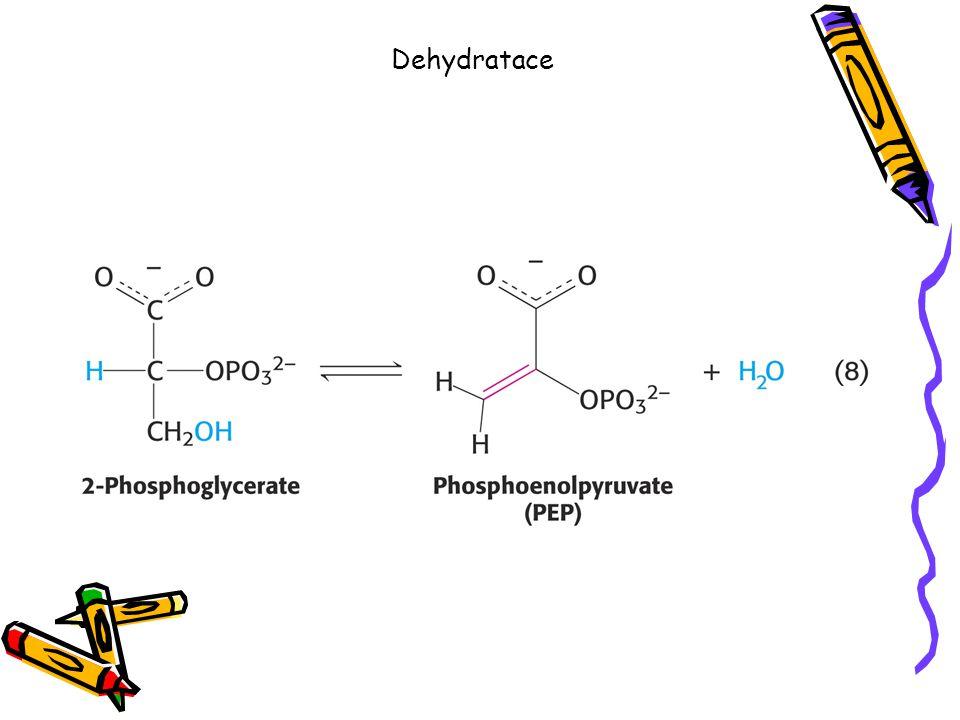 Dehydratace