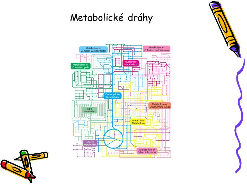 Metabolické dráhy