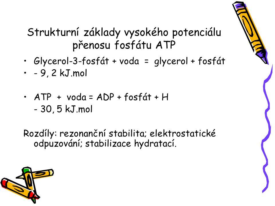 Strukturní základy vysokého potenciálu přenosu fosfátu ATP