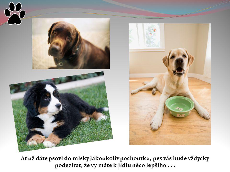 Ať už dáte psovi do misky jakoukoliv pochoutku, pes vás bude vždycky podezírat, že vy máte k jídlu něco lepšího .