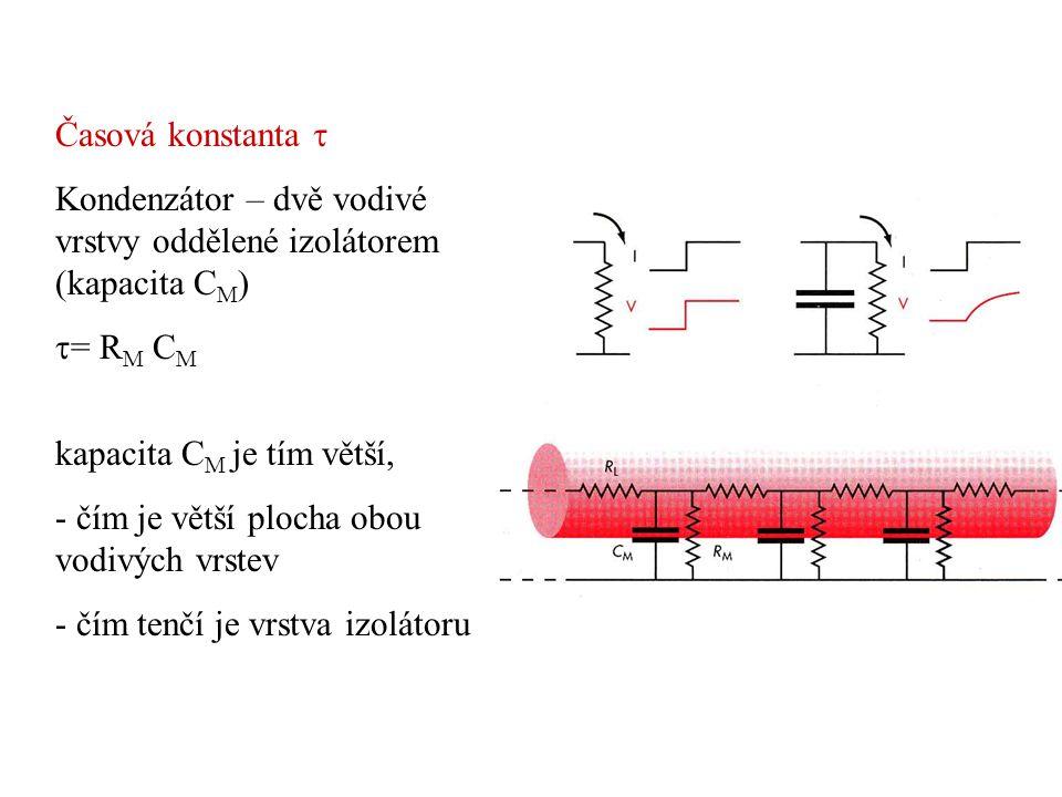 Časová konstanta  Kondenzátor – dvě vodivé vrstvy oddělené izolátorem (kapacita CM) = RM CM. kapacita CM je tím větší,